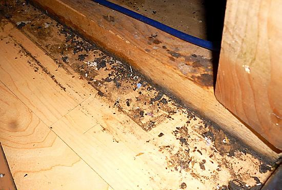 Mouse droppings on the floor