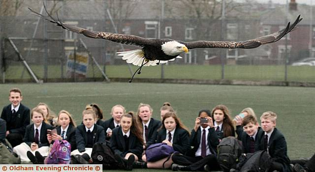 WOW factor . . . a bald eagle in flight