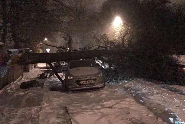 A tree fell onto cars in Werneth this morning
