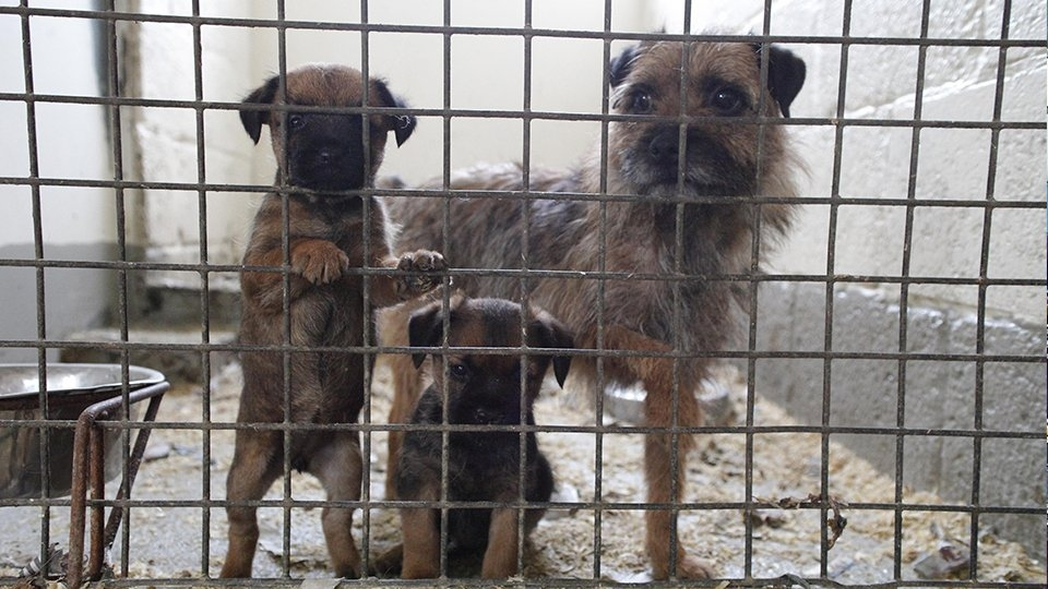RSPCA received more calls to cruelty line last Christmas in the North West - Oldham Chronicle