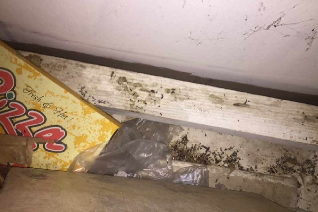 Oldham takeaway prosecuted after mouse droppings and cockroach activity is found