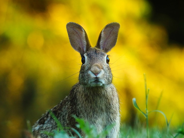 Rabbit Awareness Week (1st-9th June)