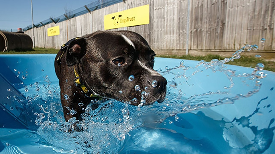 Dogs Trust Manchester will move to an appointment-only system for potential adopters from 5pm tomorrow