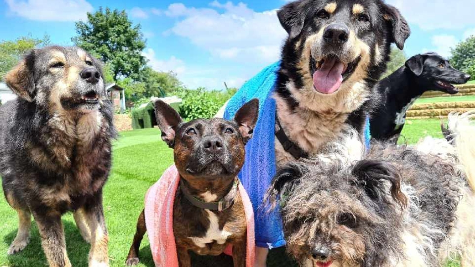Dogs4Rescue has launched its latest fundraising drive to help unwanted, abandoned and abused dogs from the UK and beyond by securing an oasis on a rural site on the outskirts of Manchester