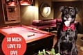 BRUCE: loves a game of pool when not being charming