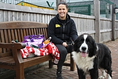 Supporter Relations Officer Louise Danson and Newfoundland Cross Blush are on the lookout for donations for the Dogs Trust Christmas Fair