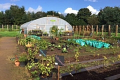 Vegetables flourish in the Waterhead Park growing hub