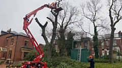 Oldham Council has been busy tackling the dangerous ash tree disease