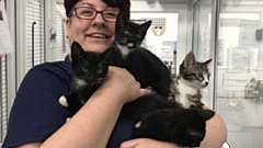 RSPCA manager Susie Hughes is pictured with the four rescued kittens