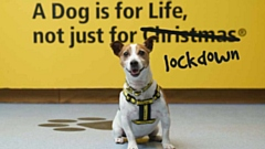 More than �13million has been awarded to Dogs Trust since the partnership with People�s Postcode Lottery first began in 2013