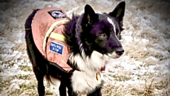 Search dog Ty